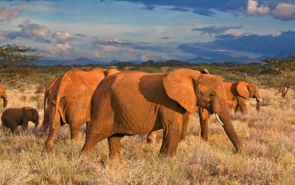 Фото обои небо, горы, африка, слоны