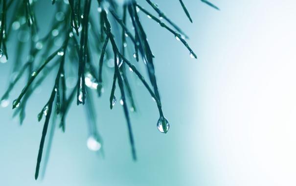 Фото обои вода, капли, макро, свет, иголки, фон, цвет