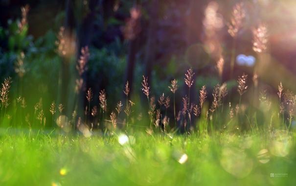 Фото обои grass, sunshine, Green, Spring