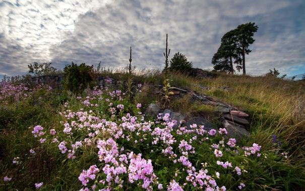 Фото обои поле, небо, пейзаж, цветы, природа
