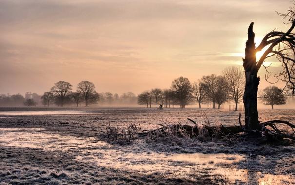 Фото обои закат, пейзаж, дерево