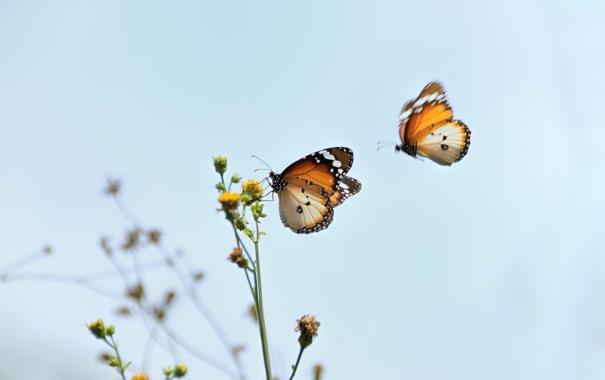 Фото обои цветок, макро, бабочки, природа, насекомое