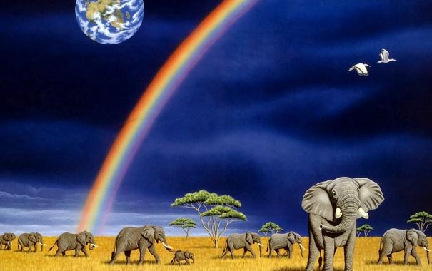 Фото обои радуга, арт, Земля, слоны, William Schimmel