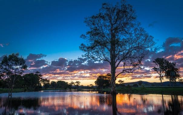 Фото обои деревья, закат, река, Австралия, Australia