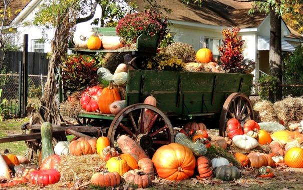 Фото обои осень, дом, дерево, урожай, тыква, повозка, усадьба