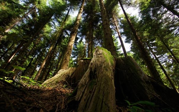 Фото обои природа, лес, корни, тени