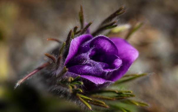 Фото обои цветок, макро, природа, фон