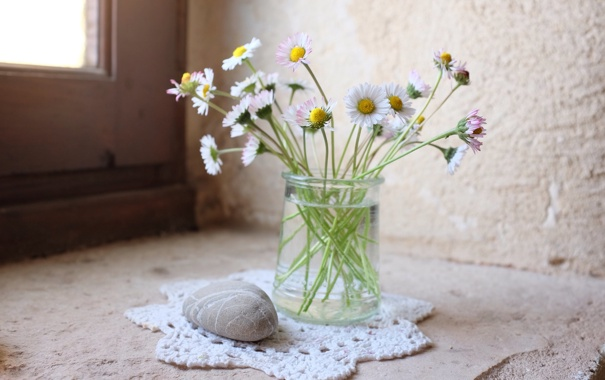 Фото обои цветы, ваза, камешек, маргаритки