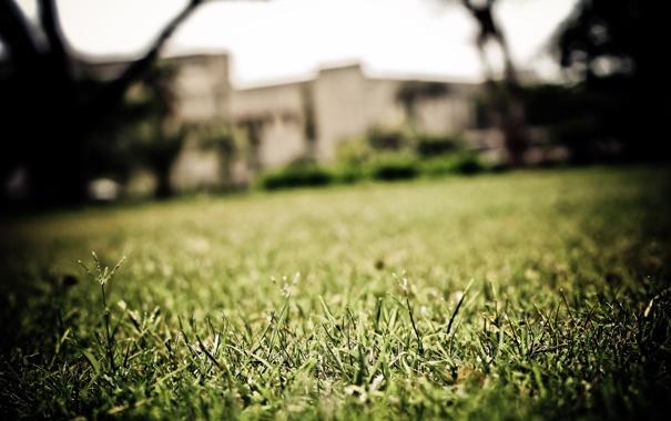 Фото обои зелень, трава, макро, газон, фокус, grass, площадка