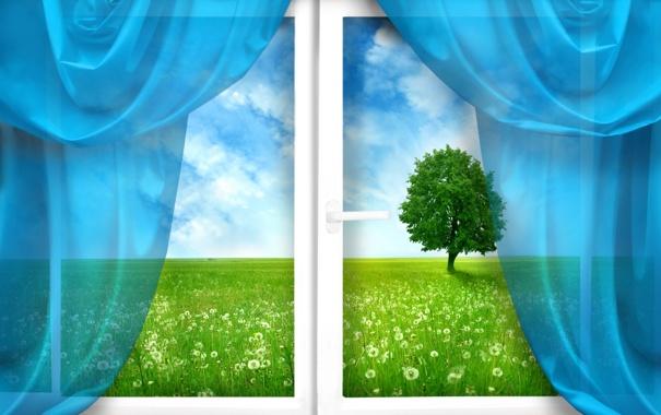 Фото обои шторы, трава, одуванчики, поле, окно, дерево