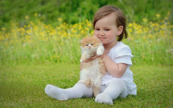 Фото обои поле, природа, девочка, котёнок, сидит, держит