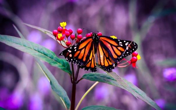 Фото обои листья, цветы, бабочка