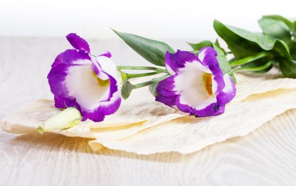 Фото обои цветы, фиолетовые, сиреневые цветы