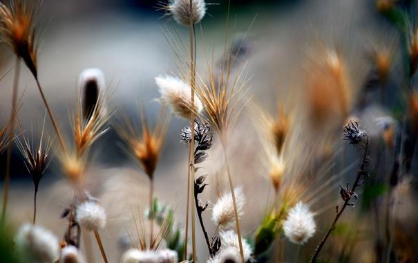 Фото обои поле, цветы, природа, растения, стебель