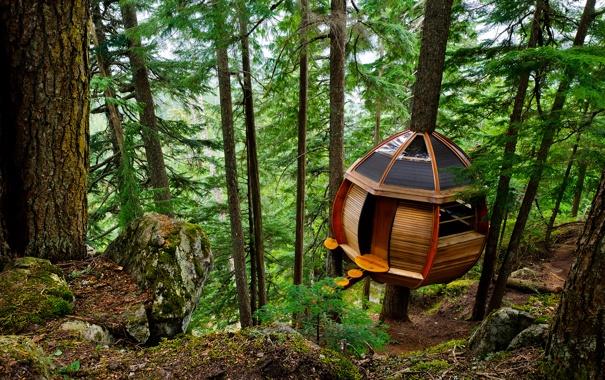 Фото обои лес, деревья, домик