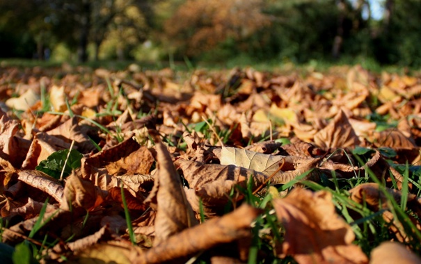 Фото обои осень, листья, макро, природа, парк, обои, осенние обои