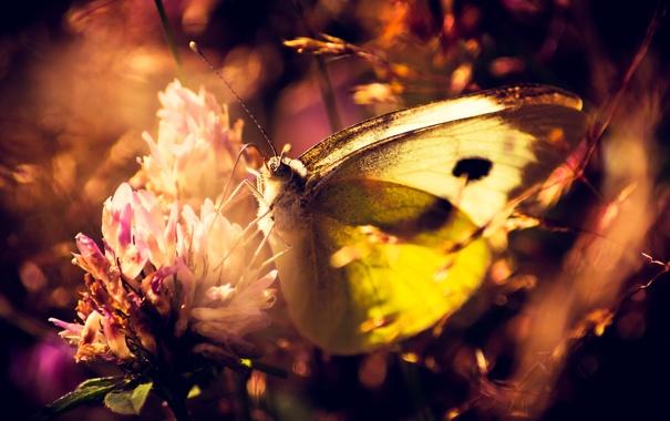 Фото обои цветок, бабочка, растения, макро. природа
