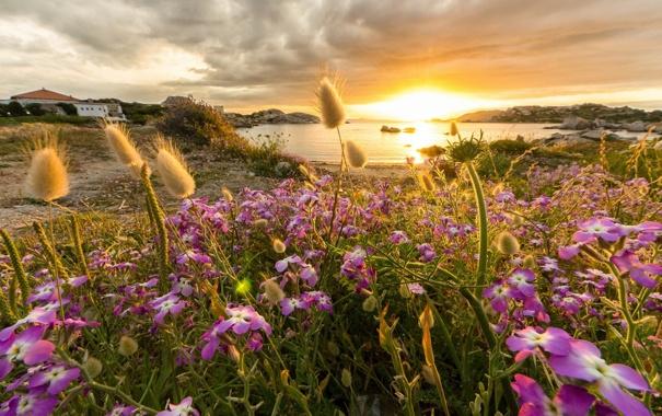 Фото обои закат, цветы, побережье, бухта
