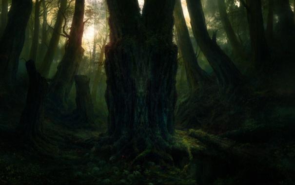 Фото обои Дерево, мудрость, старое дерево