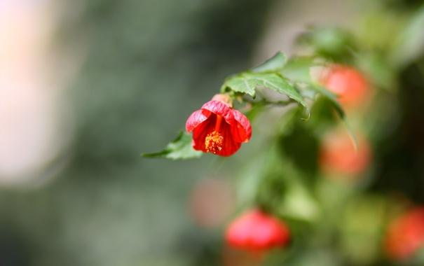 Фото обои красный, весна, цветы