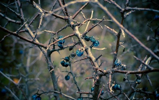 Фото обои осень, ветки, темно, терн