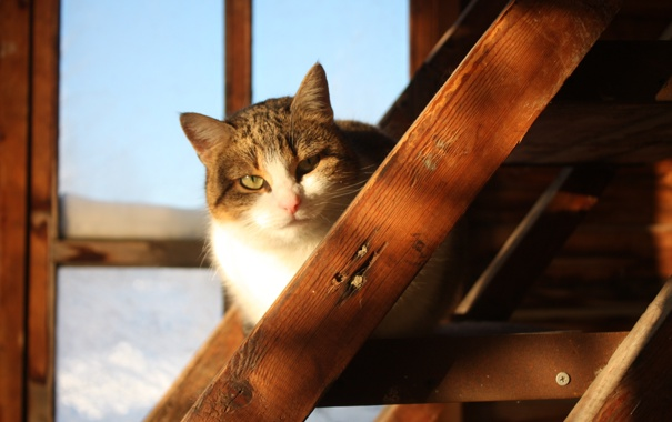 Фото обои кошка, дом, деревня