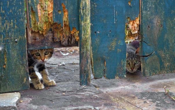 Фото обои кошки, фон, забор