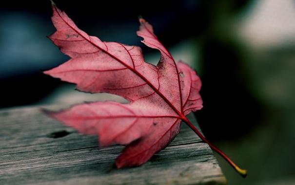 Фото обои осень, макро, лист