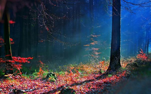 Фото обои лес, осень, bosque hdr