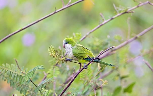 Фото обои природа, птица, фон