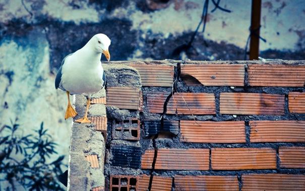 Фото обои фон, стена, птица