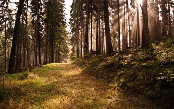 Фото обои лес, свет, zombies on parade