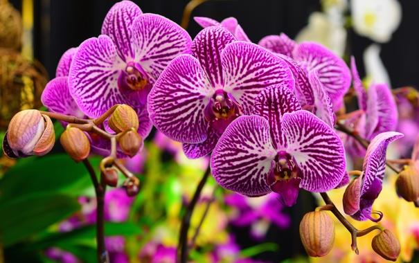 Фото обои макро, природа, растение, ветка, лепестки, орхидея
