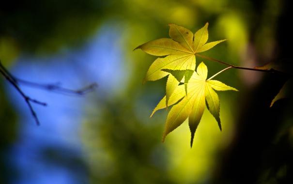 Фото обои лес, тень, цвет, листья, обои, деревья, природа
