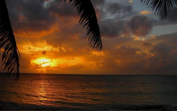 Фото обои вода, солнце, облака, закат, пальма, Пляж