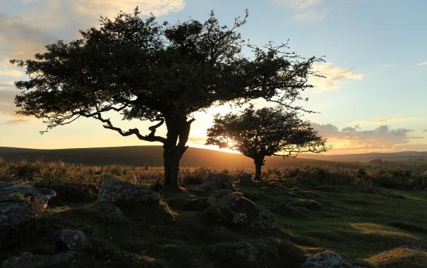 Фото обои trees, landscape, nature, sunset, dartmoor