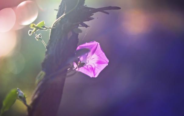 Фото обои осень, листья, розовые цветы