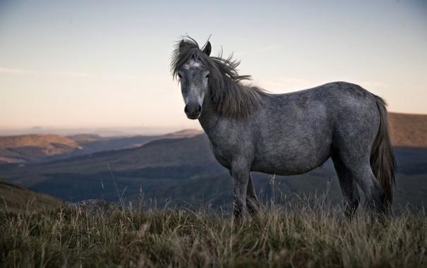 Фото обои горы, лошадь, пони