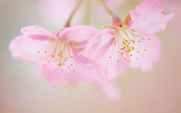 Фото обои цветы, стебли, лепестки, боке