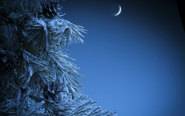 Фото обои зима, снег, ночь, иголки, месяц, ёлка