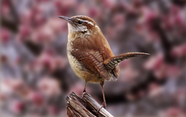 Фото обои птица, птичка, пернатое создание