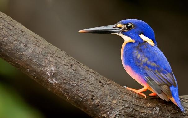 Фото обои природа, фон, птица