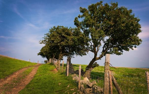 Фото обои зелень, лето, трава, деревья, природа, фото, дерево