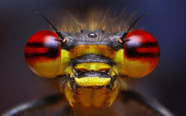 Фото обои глаза, насекомое, усики, боке