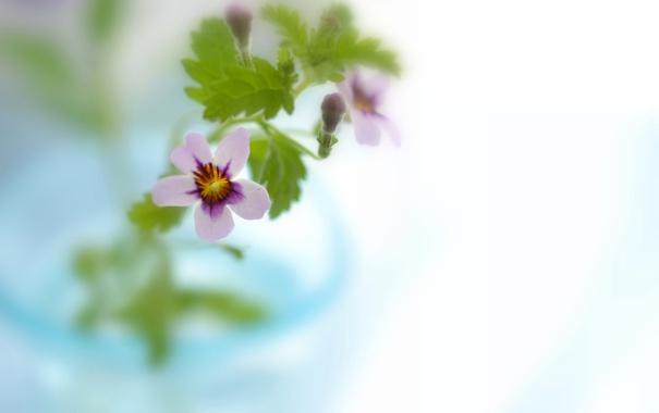 Фото обои цветок, листья, природа, растение, лепестки