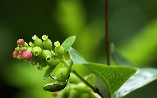 Фото обои листья, капли, макро, жук, растение. стебель