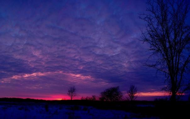Фото обои зима, небо, облака, снег, деревья, закат, дерево