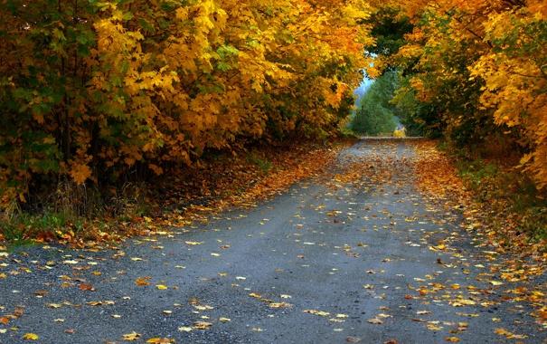 Фото обои дорога, осень, листья, деревья, листва