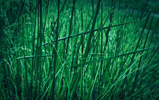 Фото обои зелень, трава, макро, природа, green, grass, macro