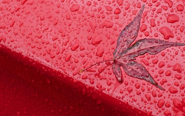 Фото обои Red, Autumn, Rain